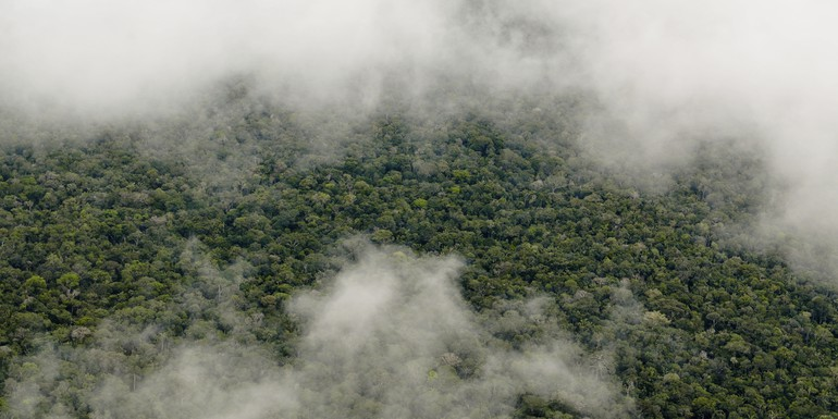 Amazon forest 3 Neil Palmer CIAT.jpg